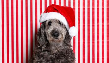 Top 10 holiday gifts for dogs and cats