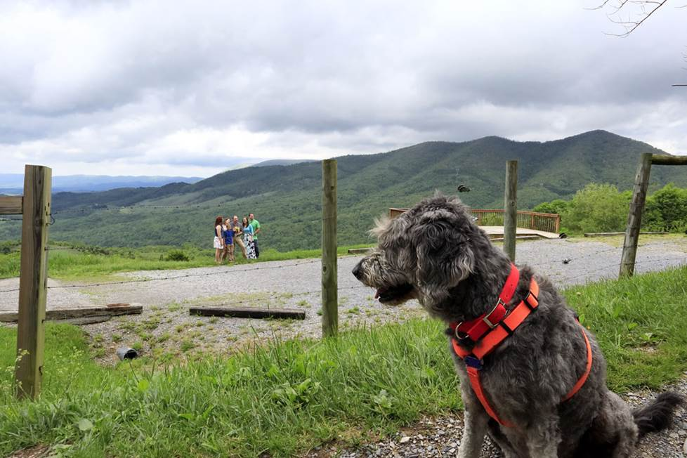 Nina the dog looking out over the mountains.