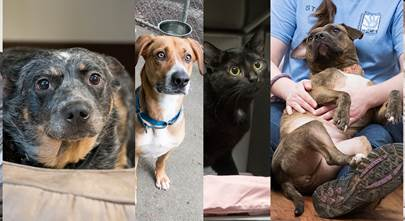 4 things we learned from our local shelter pets
